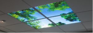 view of a ceiling skylight showing trees